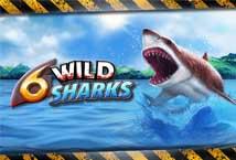 6 Wild Sharks