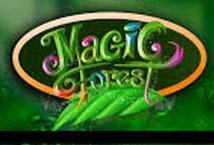 Magic Forest (Caleta)